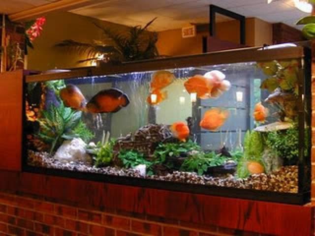 Mooiste aquarium for Achat aquarium rond
