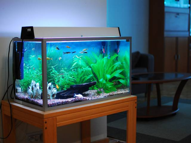 beginners vissen aquarium. Black Bedroom Furniture Sets. Home Design Ideas
