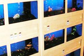 Vissoorten