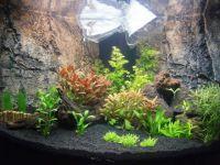 Aquarium Ideeen Inrichting.Aquarium Inrichten Met Nieuw Compleet Stappenplan
