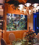 Mooiste aquarium