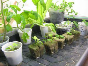 Nieuwe waterplantjes