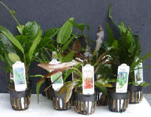 Planten in potjes met labels