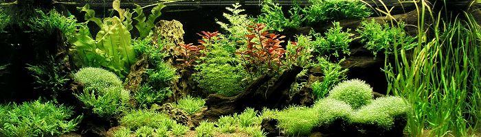 Dicht beplanten
