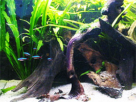 Hout in aquarium