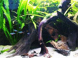 Hout in aquarium