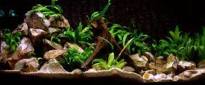 Aquarium met stenen als decoratie en tevens bedoeld voor verstopplekken en broedplaatsen