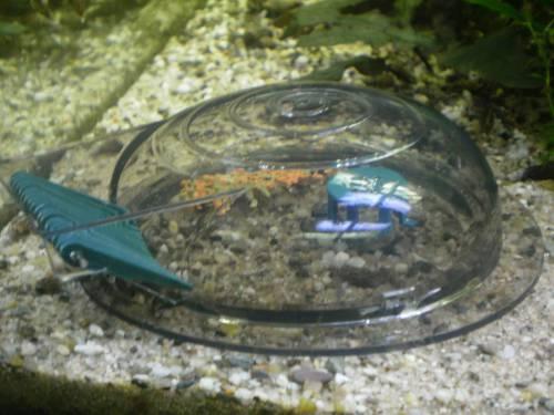 Slakkenval veilig slakken bestrijden
