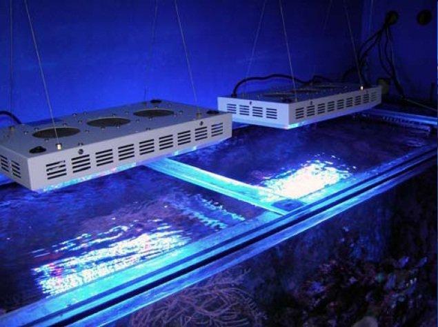 Verlichting boven aquarium