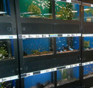 Aquariumwinkel