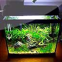 Tropisch zoetwateraquarium en techniek