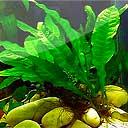 Aquariumplanten verzorging