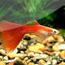Aquariumvissen en ongewervelden
