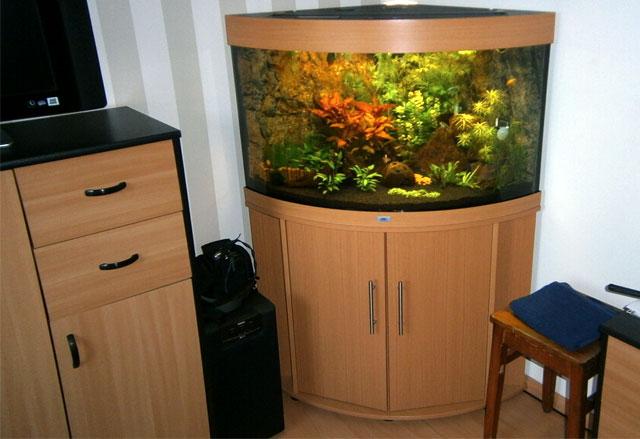 Het resultaat mag er zijn, de bak draaid volledig met in het totaal 36 nieuwe vis bewonners