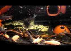 Zuid amerikaanse vissen - Decoratie slaapkamer volwassen fotos ...