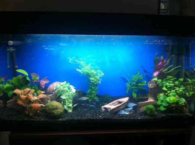 Aquarium fotos   Pagina 4