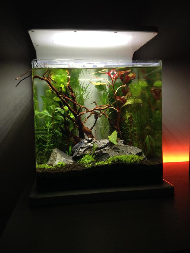 Aquarium fotos   Pagina 3