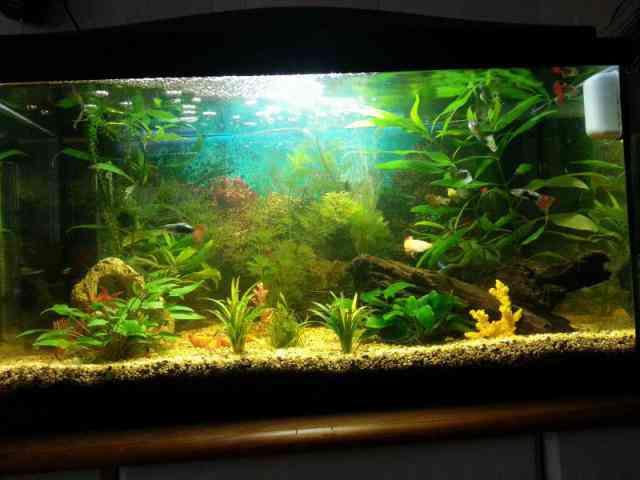 Zoetwater Aquarium Houden  Over mijzelf  Aquarium fotos pagina