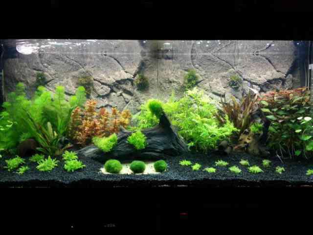Aquarium fotos   Pagina 5