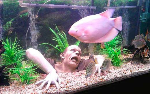 Leuk aquarium decoratie?