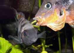 Geeuwende vissen