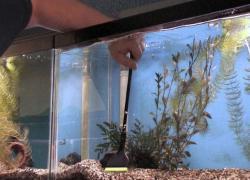 Onderhoud van tropisch zoetwater aquarium