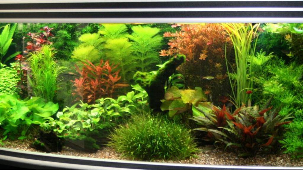 Nieuw ingericht aquarium in woonkamer