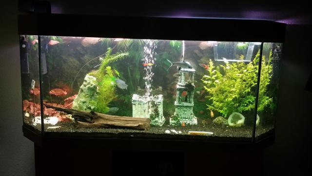 Planten Slaapkamer Baby : Aquarium op slaapkamer