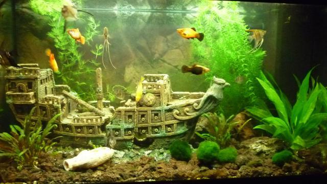 Laat je aquarium zien!