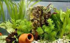Enkele tips voor de startende aquariaan