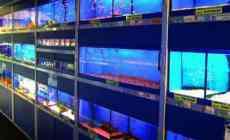 Waar moet je op letten bij het aankopen van vissen