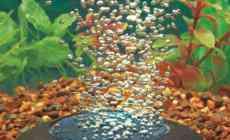 Zuurstof in aquarium