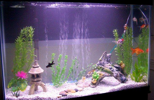 Aquarium met luchtpomp