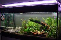 De verlichting in aquarium