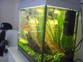Aquarium in slaapkamer