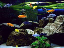 Rustgevend tropisch aquarium