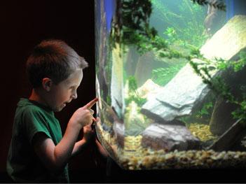 Amazone biotoop aquarium