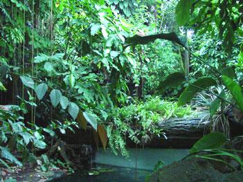 Amazone bossen
