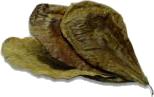 Gedroogde blaadjes van de Terminalis catappa