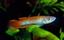 Water therapie bij vissen tegen blaas probleem