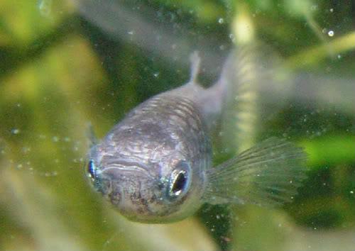 Zieke vis observeren